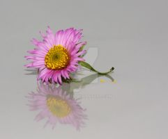 withered flower by Renesj