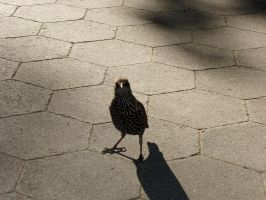 A Madison Square Park Native by JayelDraco