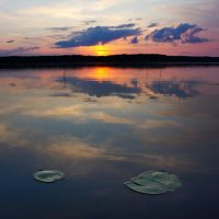 Lillypads on the mirror lake by DeingeL