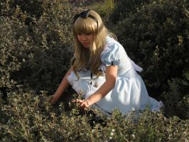 Alice Looking for Rabbit Hole by coralinee14