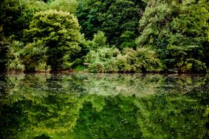 Reflection, reflection in the water II by luka567