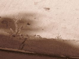 21st Century Sepia: Sidewalk by cillanoodle