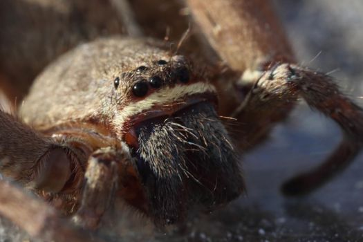 Spider Macro by osx-mkx