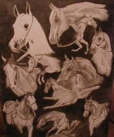 Collage of Horses by misbeavin