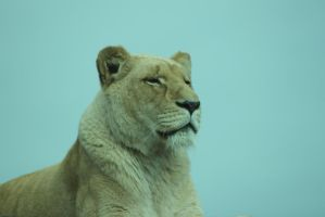 White Lioness 2 by Skarkdahn