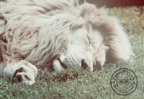 White Lion by 2BrightEyes