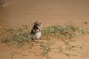 Little critter -pict 2- by Marika-Spijkers