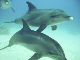 I saw dolphins :) by maarew