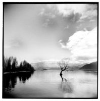 Lone Tree by BexP
