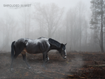 shrouded in mist by Robinflight