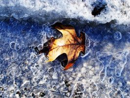 Leaf In Ice by dropsofjupiter88