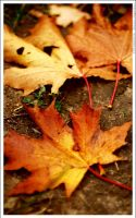 Leaves 2 by mjagiellicz