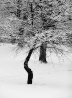 Snow Day Black and White by Elle-Arden