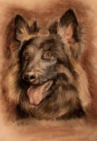 Old German Sheperd Dog by agliophobie