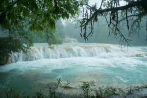 Aguas Azules Jungle Stock by little-spacey