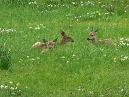 Deer With Spring Wildflowers by Gianni36