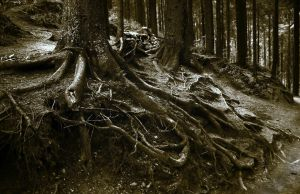 Twisted Roots by CitizenFresh