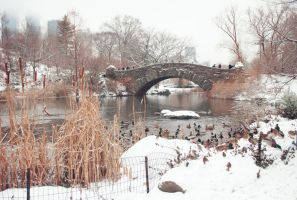 Central Park Winter Ducks by Adrianna-Grezak
