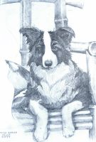 Border Collie Puppy by deviantmike423