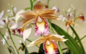 Offcenter Orchids by RyoThorn