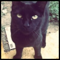 Black kitty Lola is good luck by lnp