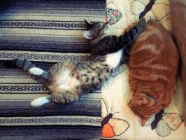 Two Kinds of Cats in the World by BengalTiger4