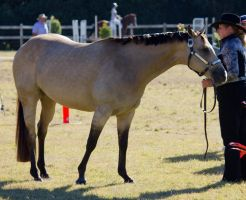 STOCK Canungra Show 2013-2 by fillyrox