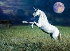 Unicorn In The Field At Night by Lliryht