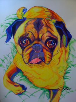Prismacolor Pug by Drawingremy