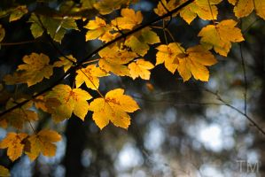 Autumn leaves. by 2ne92