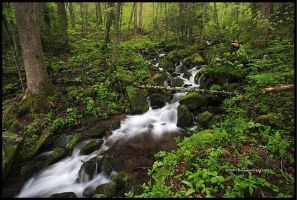 2011 Spring Part Two GSMNP by TRBPhotographyLLC
