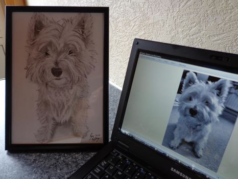 A West Ireland terrier by FeelmyRaf