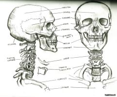 ~Skull Structure~ by YuukiCross5