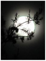 The April Moon 2012 by CrystalMarineGallery