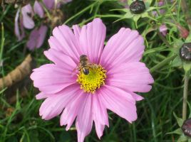 Pink Flower and a Bee by ArkosSven