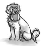 Portuguese Water Dog Sketch by justjingles