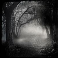 Black Woods III by intao