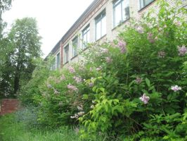 Lilac bushes near the building by Garr1971