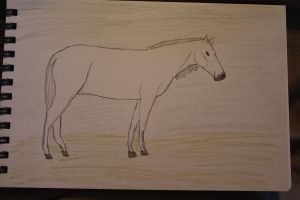 UDSS 113-Ghostly Encounter(Horse Name: 016 Ghost G by OceanLore