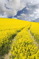 Yellow Field 3174000 by StockProject1