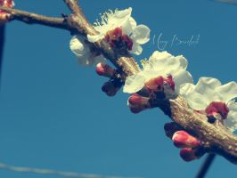 Blooming_2 by MaryBrodzeli