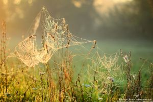 Cobwebs by patrykcyk