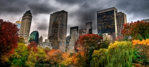 central park in the fall by greycamera