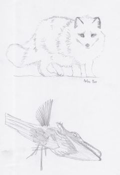Artic Animals by James-is-a-Fanboy