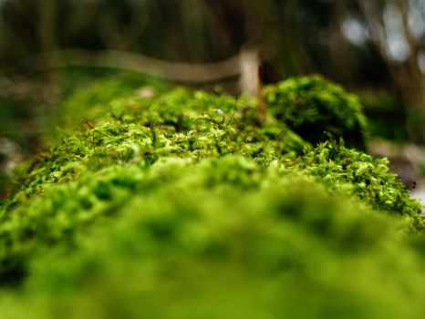 Moss .. by block-party