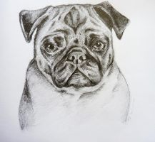 Pugly by MiDulceLocura