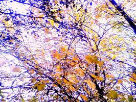 Autumn Leaves.. by Lakeee