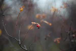 End of autumn by BIREL