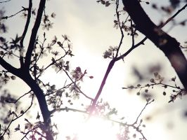spring. by visual-sick