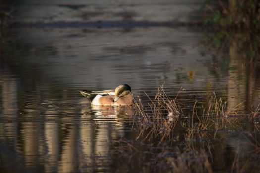 A late winter afternoon on the pond... by Milanogreg